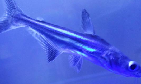 壁纸 动物 海洋动物 鱼 鱼类 桌面 534_320